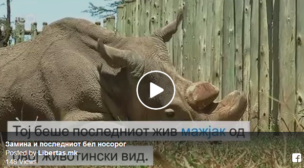 Последниот мажјак од видот северен бел носорог умре денеска. Со него, изумира и неговиот вид. Но можеби, сепак, има надеж…