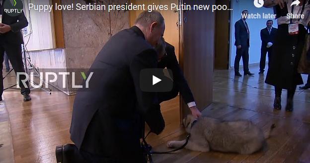 Вучиќ му подари на Путин шарпланинец