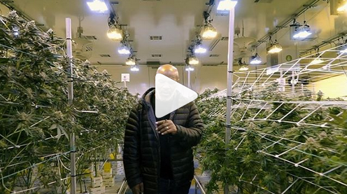 Мајк Тајсон отвори ранч за производство на марихуана