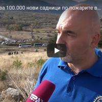 Акција за 100.000 нови садници по пожарите во битолско