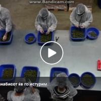 Дуковски: Ако нема извоз, канабисот ќе го истуриме пред влада