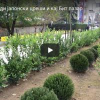 Градот Скопје сади јапонски цреши и кај Бит пазар