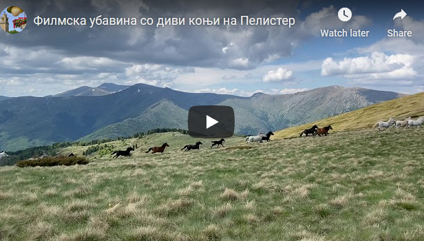 Филмска убавина со диви коњи на Пелистер